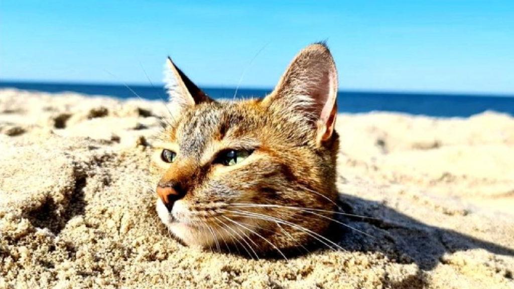 Gata na praia